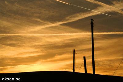 Solnedgång med fågel påspan